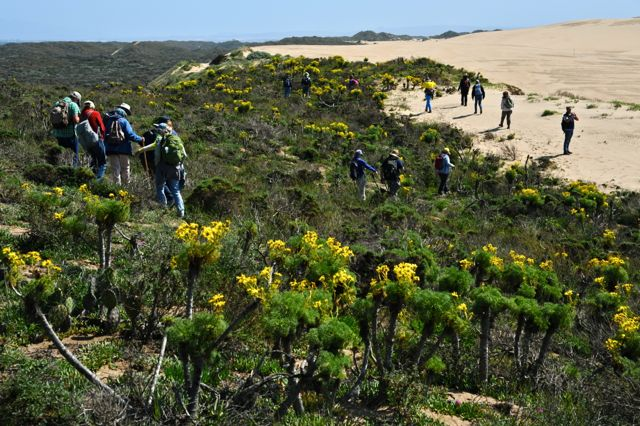 Coreopsis Hill Vegetation and Dunes JE