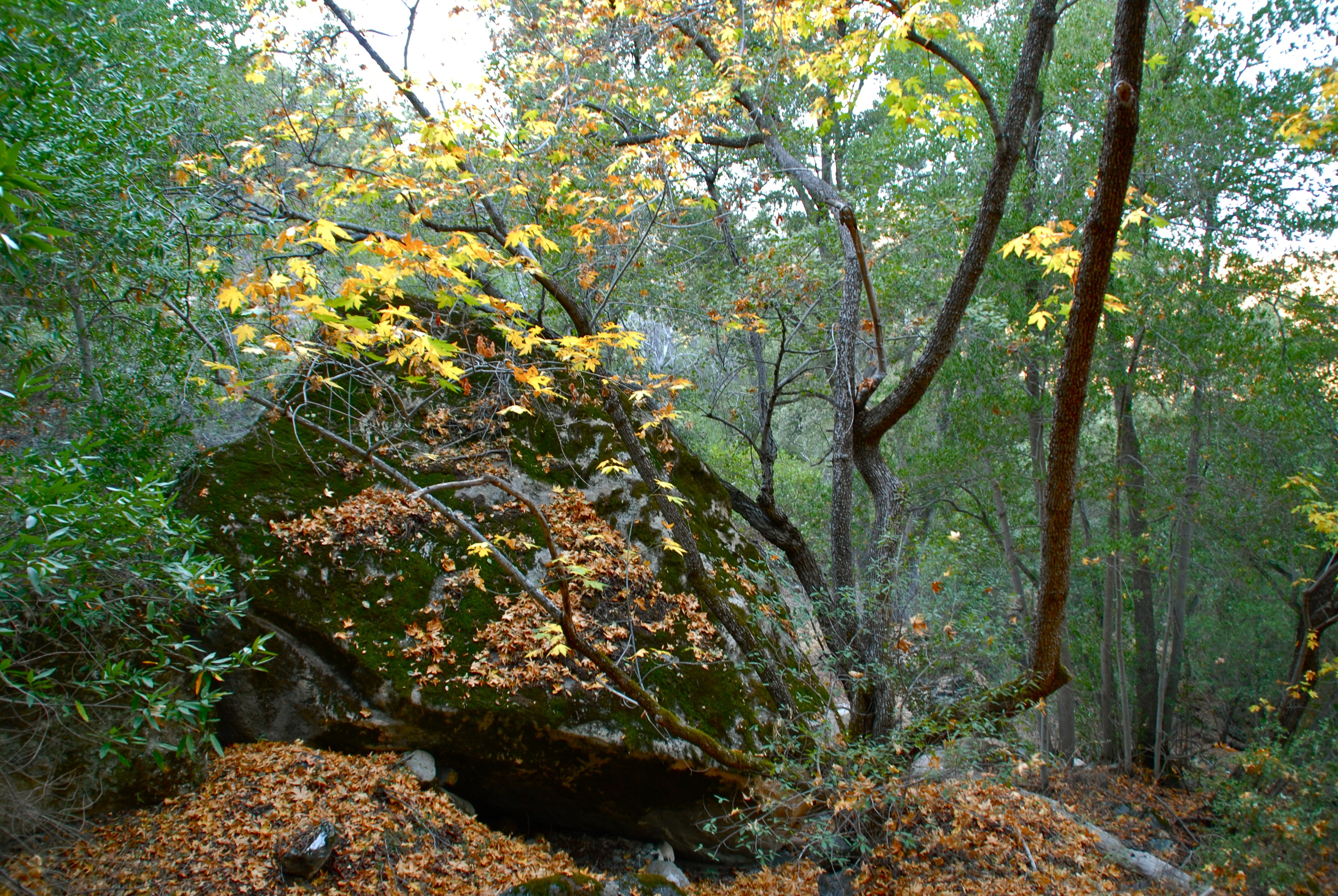 Sunday, November 12: Fall Colors in Fir Canyon