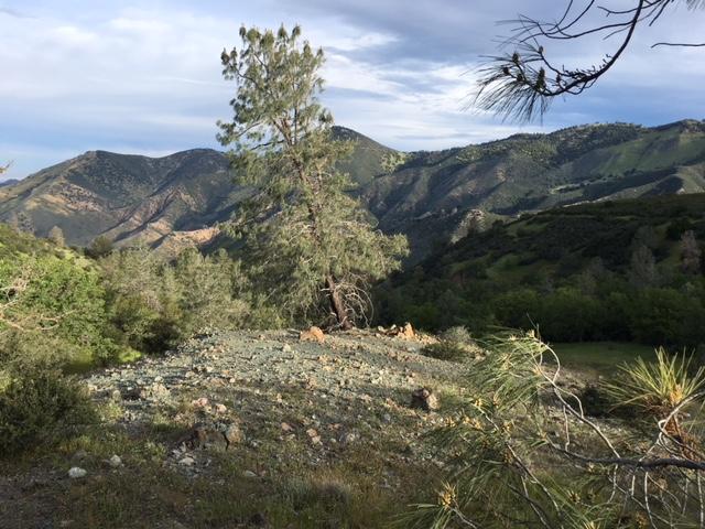 Serpentine Landscape Near Fig Mt LizGaspar